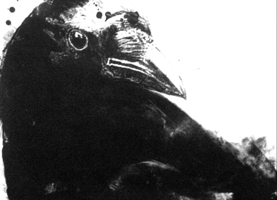 James Reed, Untitled [Crow Face], 2018, lithograph on paper, Fairfield University Art Museum